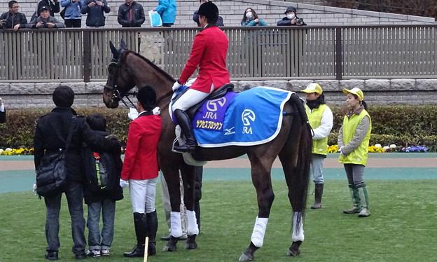 サクセスブロッケン(東京競馬場誘導馬)