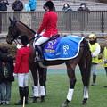 Photos: サクセスブロッケン(東京競馬場誘導馬)