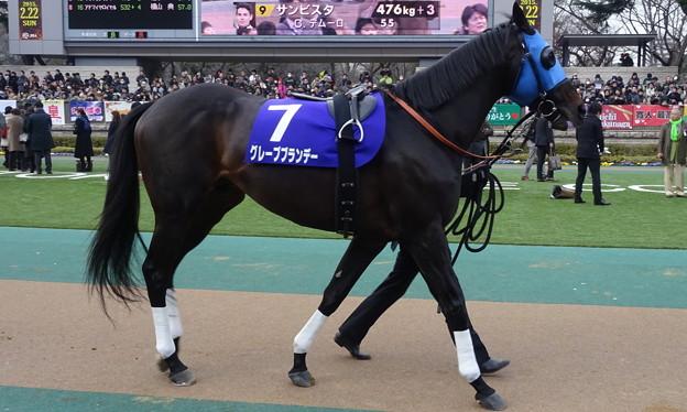 グレープブランデー(1回東京8日 11R 第32回 フェブラリーステークス(G?)出走馬)