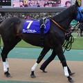 Photos: グレープブランデー(1回東京8日 11R 第32回 フェブラリーステークス(G?)出走馬)