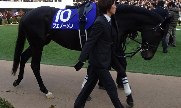 フェノーメノ(4回中山8日 10R 第59回グランプリ 有馬記念(GI)出走馬)