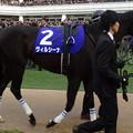 Photos: ヴィルシーナ(4回中山8日 10R 第59回グランプリ 有馬記念(GI)出走馬)