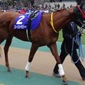 Photos: コーリンベリー(1回東京8日 11R 第32回 フェブラリーステークス(GI)出走馬)