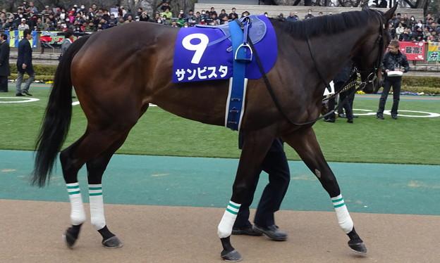サンビスタ(1回東京8日 11R 第32回 フェブラリーステークス(GI)出走馬)