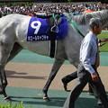 ホエールキャプチャ(2回東京8日 11R 第9回 ヴィクトリアマイル(GI)出走馬)
