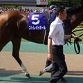 Photos: ストレイトガール(2回東京8日 11R 第10回 ヴィクトリアマイル(GI)出走馬)