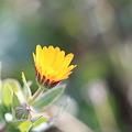 Photos: 立春