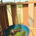 写真: 水生植物