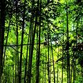 竹林の光と影