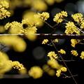 Photos: 春へ一直線