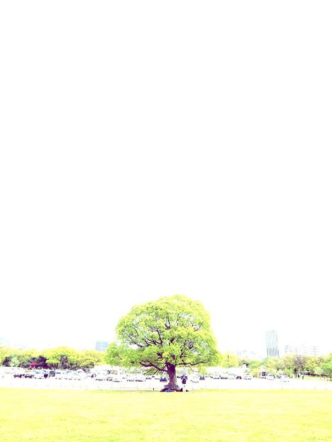 新緑燃ゆ樹の袂で~カッシュ!グビグビグビ!プッハ~!!と行きたいぜ~(-_-;)