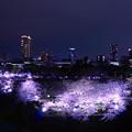 夜桜 - Osaka Castle Park -