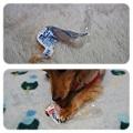 写真: 20120207 JURIのおもちゃ?!