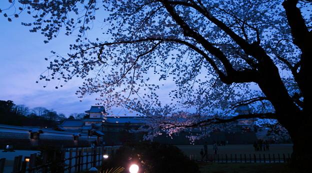 金沢城と桜(3)