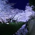 金沢城 お堀 満開の桜(1)