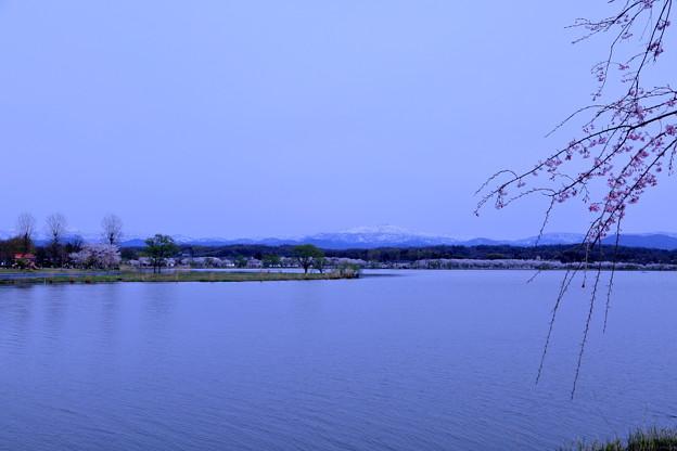 木場潟 白山と桜並木