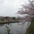 Photos: 桜とお堀