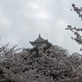 桜に埋もれた天守閣