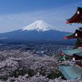 塔に桜に不二の山