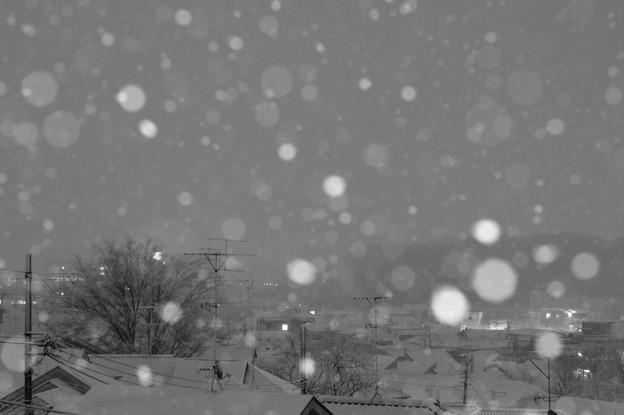 写真: 久しぶりの雪
