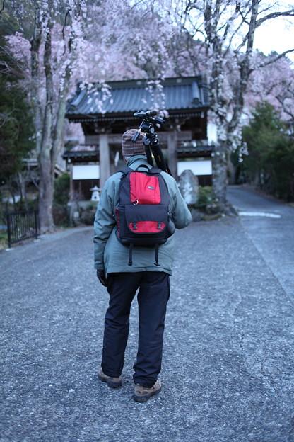 Photos: 桜巡礼`12'(身延、久遠寺、桜と人編)-1