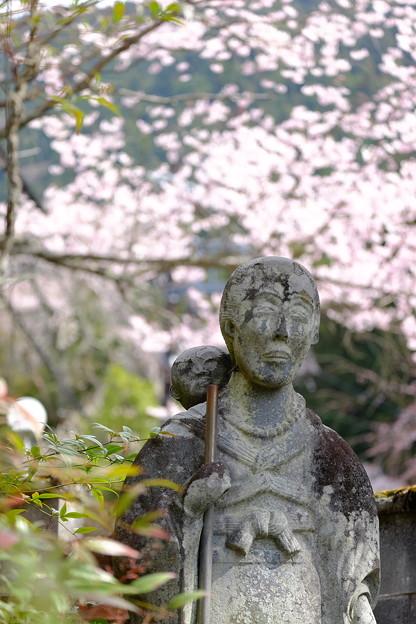 桜`15(久遠寺編)-20