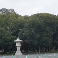 Photos: 橿原神宮の写真0008