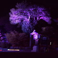 橿原神宮の写真0091