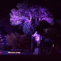 Photos: 橿原神宮の写真0091
