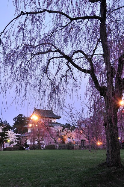 夕日も落ちてライトアップ開始・・弘前城本丸