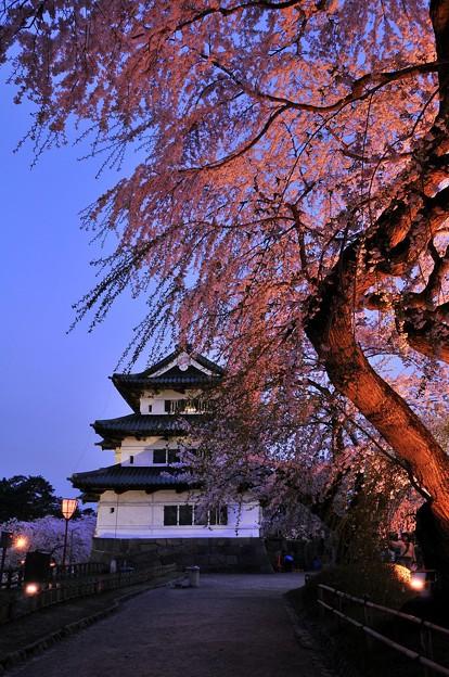 ライトアップされた夜桜と弘前城・・・