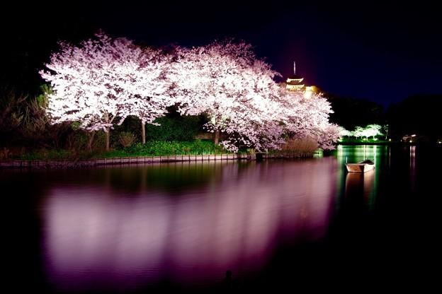 この日最後の静寂な夜桜。。横浜三渓園。。3月31日