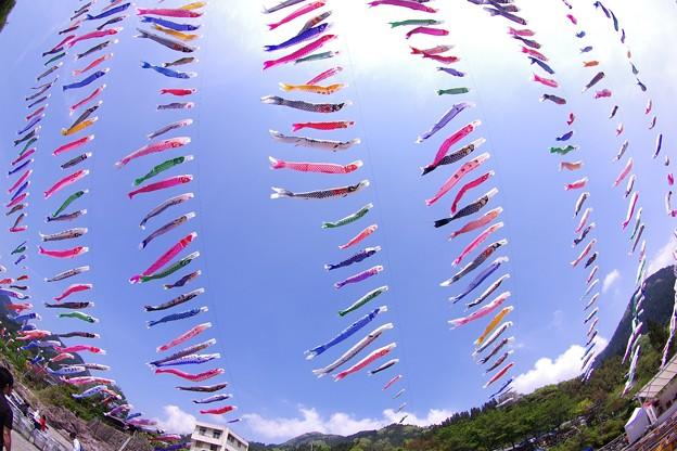 魚眼で見る大空泳ぐ鯉のぼり。。神流町 4月29日