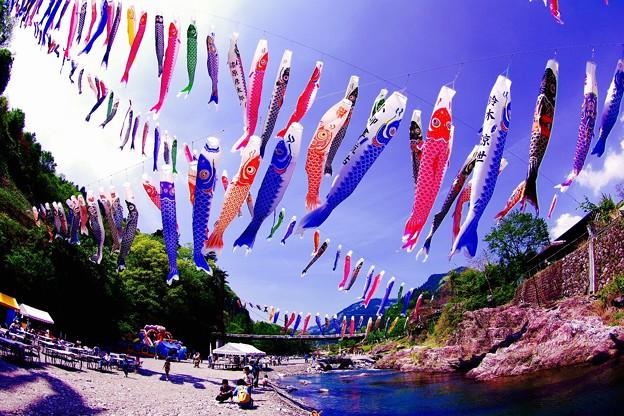 魚眼で見る神流川から泳ぐように。。神流町 4月29日