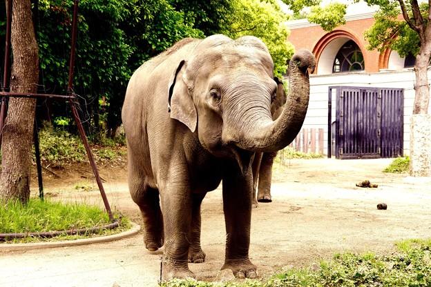 朝から元気いいインド象さん。。笑(^^) 20150525