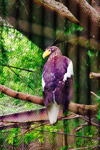 凛々しいイーグル。。よこはま動物園ズーラシア 5月25日