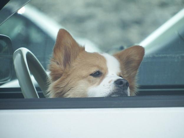 車内で主を待つ忠犬 vol.2