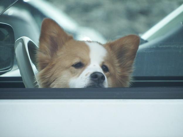 車内で主を待つ忠犬 vol.4
