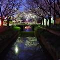 Photos: 水路と桜 vol.2