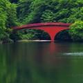 Photos: 翠を支える紅