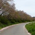 志文川堤防桜並木