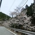 Photos: 峠の桜は見頃