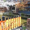 京都・祇園白川の桜2
