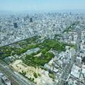Photos: 天王寺公園