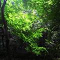 Photos: 緑。