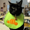 Photos: Ekkun-HalloweenApron-Oct2011