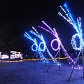 Photos: 昭和記念公園のイルミネーション#8