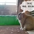 Photos: あ1