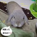 Photos: うさ小物3