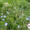 Photos: 春2